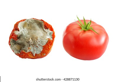 rotten tomatoes isolated images stock photos vectors shutterstock