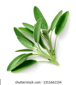 fresh sage herb isolated on white background