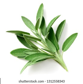 fresh sage herb isolated on white background, top view