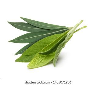 Fresh sage leaves and Eucalyptus isolated on white background