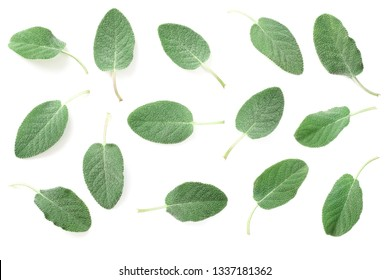 fresh sage leaves isolated on white background, top view