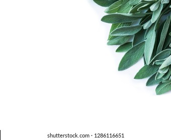 Fresh sage leaves on white background. Top view. Fresh sage at border with copy space for text.