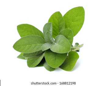 fresh sage on white background