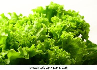 Fresh salad leaf lettuce- organic background concepts.