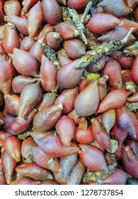 Fresh salak fruit