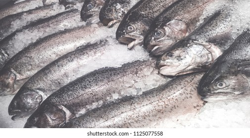 fresh salmon trout (seatrout)