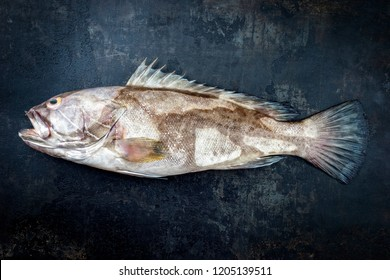 Fresh saltwater white grouper as top view on black rustic background with copy space