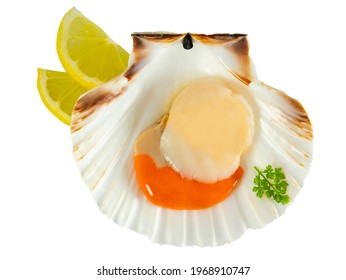 Fresh scallop isolated on white background. Raw scallop with coral and roe, decorated with lemon and parsley.