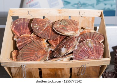Fresh scallops in a crate at a fishmonger