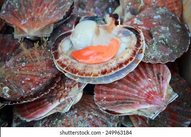 fresh scallops at french fish market