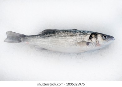 Fresh Sea Bass fish on bright white ice