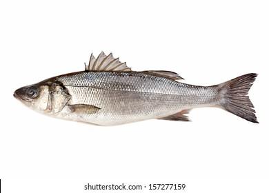 Fresh sea bass isolated on white background