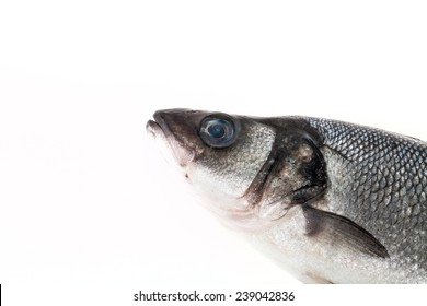 fresh sea bass on a light background