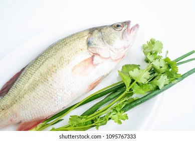 Fresh sea bass and spices on white background