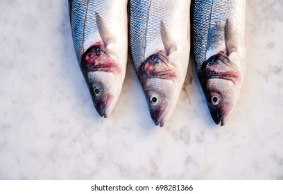 Fresh sea basses seen from above