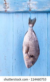 Fresh sea bream is hanging headlong on a hook on a blue wooden board, fresh fished, catch the fish