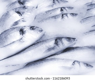 fresh sea fish in market