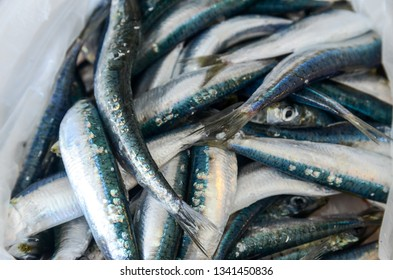 Fresh sea fish on a market. Seafood market. Sardines on ice for sale on the street. Fishmonger selling fish and seafood. Display of Pilchard. Fishmonger sold fresh fish.