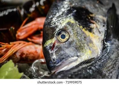 fresh sea food close up - lobster, shrimps, octopus, shells, prawns