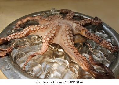 Fresh sea octupus on ice on a metallic bowl.