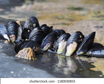 Fresh sea water mussels on rock in small pool of water with reflections