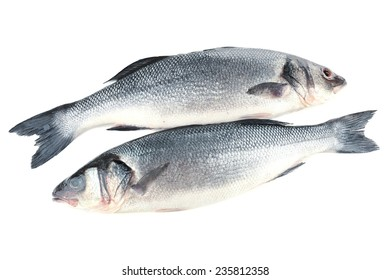 Fresh seabass fish isolated on white