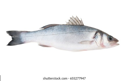 Fresh seabass fish isolated on white background, Dicentrarchus labrax.
