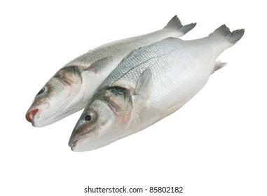 Fresh seabass fish isolated on white background