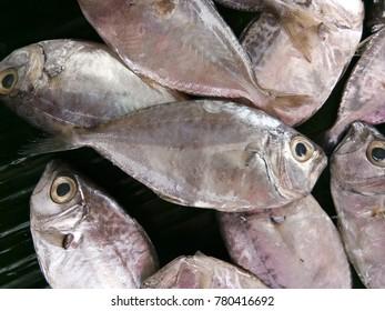 the fresh seafood