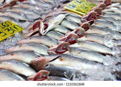 Fresh Seafood Market in Ang Sila Town, Chonburi There are many fish species available.