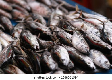 Fresh seafood on traditional fish market in Palu city. Fresh fish selling in the fish market in inpres market - Traditional local Pasar Ikan Sulawesi Tengah.  - Shutterstock ID 1888261594