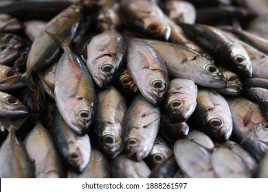 Fresh seafood on traditional fish market in Palu city. Fresh fish selling in the fish market in inpres market - Traditional local Pasar Ikan Sulawesi Tengah.  - Shutterstock ID 1888261597
