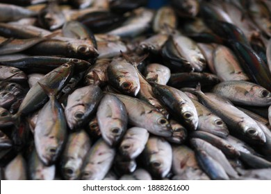 Fresh seafood on traditional fish market in Palu city. Fresh fish selling in the fish market in inpres market - Traditional local Pasar Ikan Sulawesi Tengah.  - Shutterstock ID 1888261600