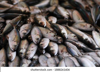 Fresh seafood on traditional fish market in Palu city. Fresh fish selling in the fish market in inpres market - Traditional local Pasar Ikan Sulawesi Tengah.  - Shutterstock ID 1888261606