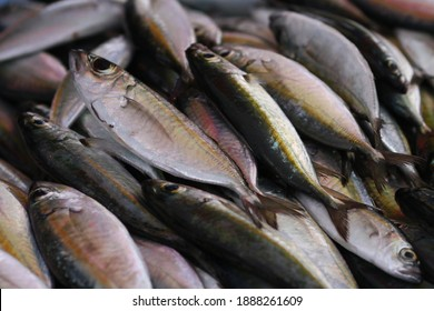 Fresh seafood on traditional fish market in Palu city. Fresh fish selling in the fish market in inpres market - Traditional local Pasar Ikan Sulawesi Tengah.  - Shutterstock ID 1888261609