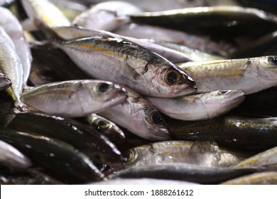 Fresh seafood on traditional fish market in Palu city. Fresh fish selling in the fish market in inpres market - Traditional local Pasar Ikan Sulawesi Tengah.  - Shutterstock ID 1888261612