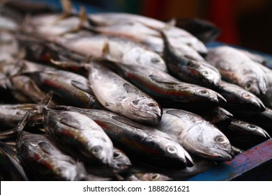 Fresh seafood on traditional fish market in Palu city. Fresh fish selling in the fish market in inpres market - Traditional local Pasar Ikan Sulawesi Tengah.  - Shutterstock ID 1888261621