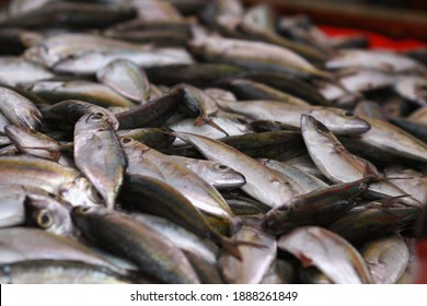 Fresh seafood on traditional fish market in Palu city. Fresh fish selling in the fish market in inpres market - Traditional local Pasar Ikan Sulawesi Tengah.  - Shutterstock ID 1888261849
