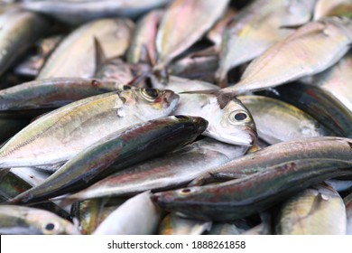 Fresh seafood on traditional fish market in Palu city. Fresh fish selling in the fish market in inpres market - Traditional local Pasar Ikan Sulawesi Tengah.  - Shutterstock ID 1888261858