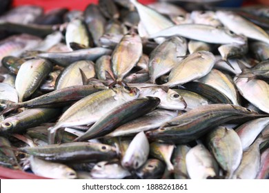 Fresh seafood on traditional fish market in Palu city. Fresh fish selling in the fish market in inpres market - Traditional local Pasar Ikan Sulawesi Tengah.  - Shutterstock ID 1888261861