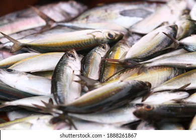 Fresh seafood on traditional fish market in Palu city. Fresh fish selling in the fish market in inpres market - Traditional local Pasar Ikan Sulawesi Tengah.  - Shutterstock ID 1888261867