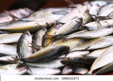 Fresh seafood on traditional fish market in Palu city. Fresh fish selling in the fish market in inpres market - Traditional local Pasar Ikan Sulawesi Tengah.  - Shutterstock ID 1888261873