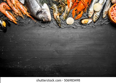 Fresh seafood. Various marine shrimp, shellfish and lobsters at the fishing net. On a black chalkboard.