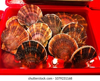 fresh seashells in Hong Kong seafood market