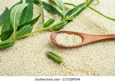 Fresh sesame seeds and white sesame