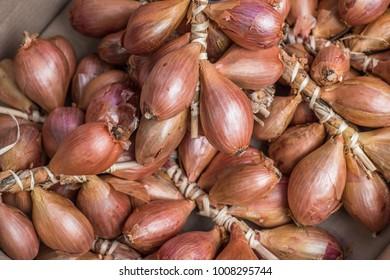 fresh shallots at farmers market