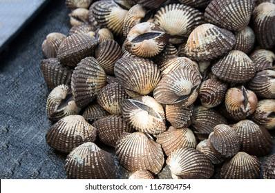 fresh shell on the street market near ocean of Thailand