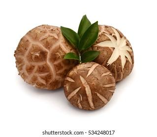 Fresh shiitake mushroom isolated on white background
