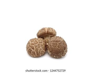 Fresh shiitake mushroom on the white background