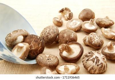 fresh shiitake mushroom of Thailand